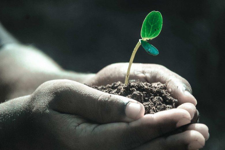 Hand, die Erde und eine Pflanze hält